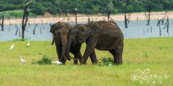srilanka63