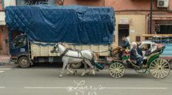 marrakesh36