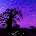 Kalahari Stars