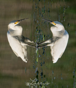 guess-egrets-1