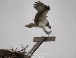 landing-1
